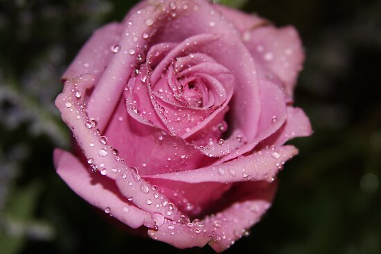 *Pink Rose* by Van Coleman