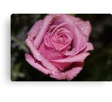 *Pink Rose* Canvas Print