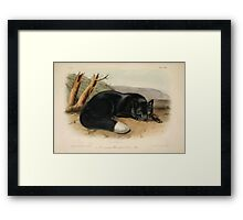 James Audubon - Quadrupeds of North America V3 1851-1854  American Black or Silver Fox Framed Print