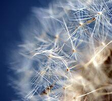 Dandelion in the Wind by sstarlightss