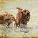 Retrievers at play by FelicityB