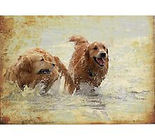 Retrievers at play Photographic Print