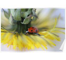 Ladybug and Dandelion Poster