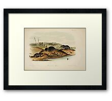 James Audubon - Quadrupeds of North America V2 1851-1854  Carolina Shrew Framed Print