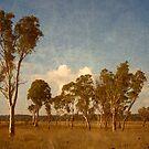 Thunderbolt Country - Uralla, Northern Tablelands, NSW, Australia by Kitsmumma