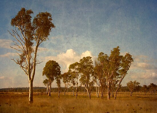 Thunderbolt Country - Uralla, Northern Tablelands, NSW, Australia by Kitsmumma
