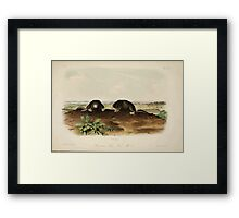 James Audubon - Quadrupeds of North America V2 1851-1854  Common Star Nose Mole Framed Print