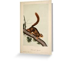 James Audubon - Quadrupeds of North America V2 1851-1854  Red Tailed Squirrel Greeting Card