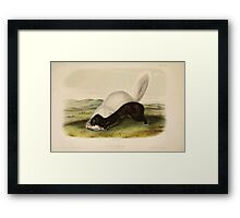 James Audubon - Quadrupeds of North America V2 1851-1854  Texan Skunk Framed Print