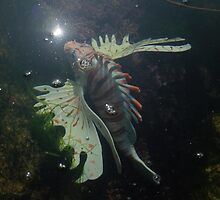 Weird Fish In A Rock Pool by Mark Haynes Photography