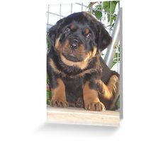 A Little Tickle - Rottweiler Puppy Greeting Card