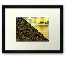 Cork Tree in Autumn the Salmon Ponds, Tasmania Framed Print