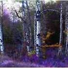 Aspen in Purple and Blue  by Wayne King