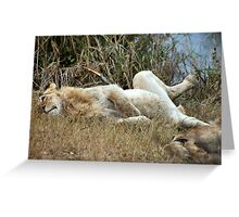 AFTER THE KILL.... WELL FED!! Greeting Card
