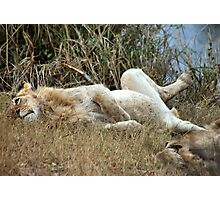 AFTER THE KILL.... WELL FED!! Photographic Print