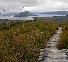 Tantalizing Tasmania by Patty (Boyte) Van Hoff