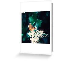 Vintage Butterfly Greeting Card