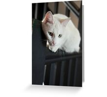 White cat on black Greeting Card