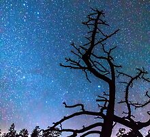 Astrophotography Night by Bo Insogna