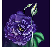 Lisianthus flower and buds Photographic Print