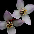 Wild Flower by sarah ward