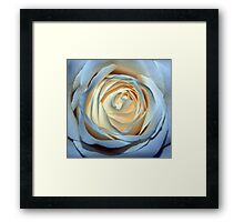 Two-Tone Rose Framed Print