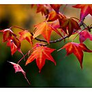 Colours of Autumn by Sharon Hammond