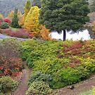 autumn beauty at Burnie (Tasmania) by gaylene