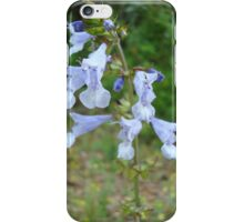 LYRE LEAF SAGE - A BEAUTIFUL FLORIDA WILDFLOWER iPhone Case/Skin