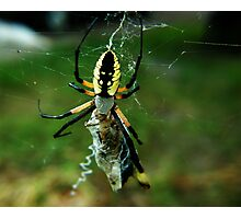 Banana Spider Photographic Print