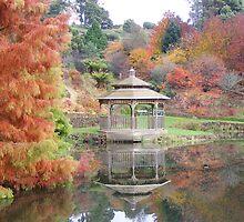 Tree beauties - Tasmania by gaylene