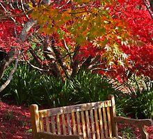 Red Autumn Relaxing by Kellea Croft