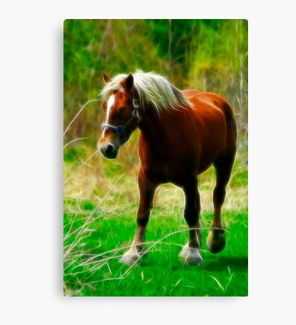 Belgian Standing Strong Canvas Print