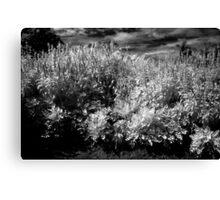 Plant texture Canvas Print