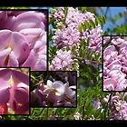 Pink Acacia Study by pmn-photography