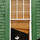 Cat in the window by MaluC