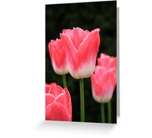 Pink tulip Greeting Card