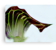 Purple and Green Jack-N-the-Pulpit Canvas Print