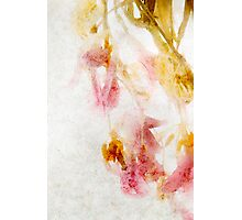 Tulip Glow - Textured Photographic Print