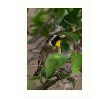 Common Yellow Throat Warbler Art Print
