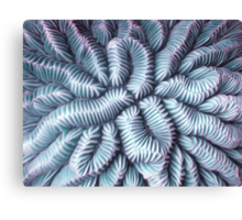Pic Your Brain Coral (Charged) Canvas Print