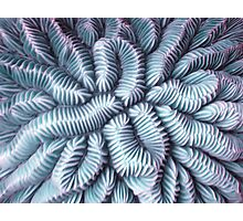 Pic Your Brain Coral (Charged) Photographic Print