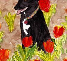 Black Dog in Red Tulips Sticker