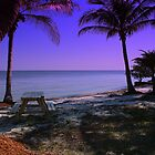 Beautiful SW Florida 2010 by Virginia N. Fred