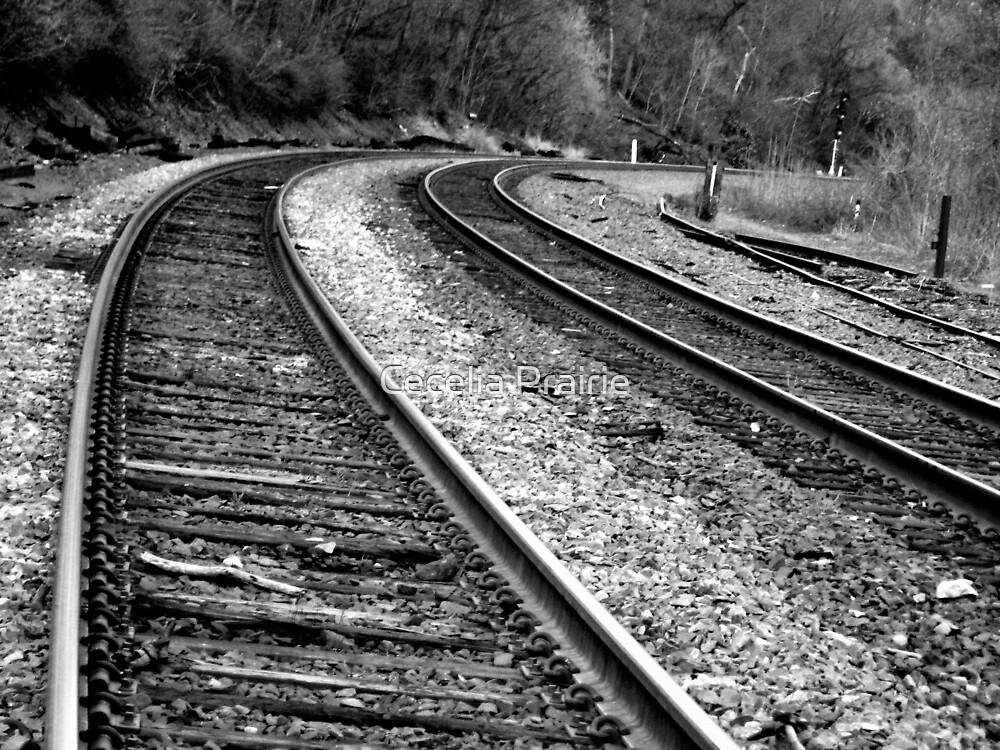 Taking the Train Home by Cecelia Prairie