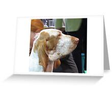 Awesome Bracco Italiano