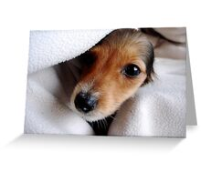 Pups in a Blanket Greeting Card