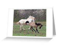 Fillies playing 2 Greeting Card