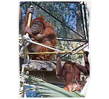 Primate Workout Poster