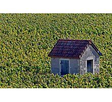 Vineyard Hut Photographic Print